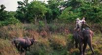 annapurna-river-rhinos